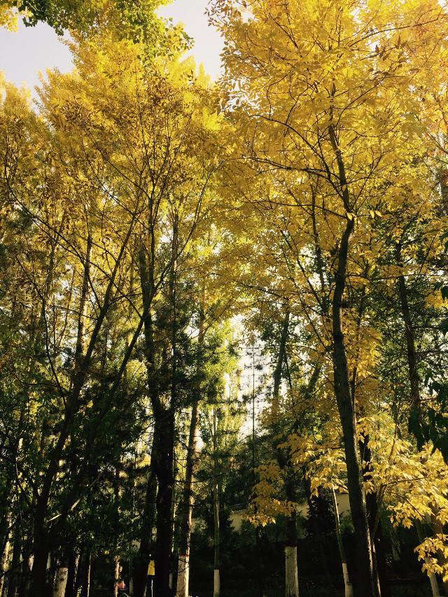#photography #autumn #nature