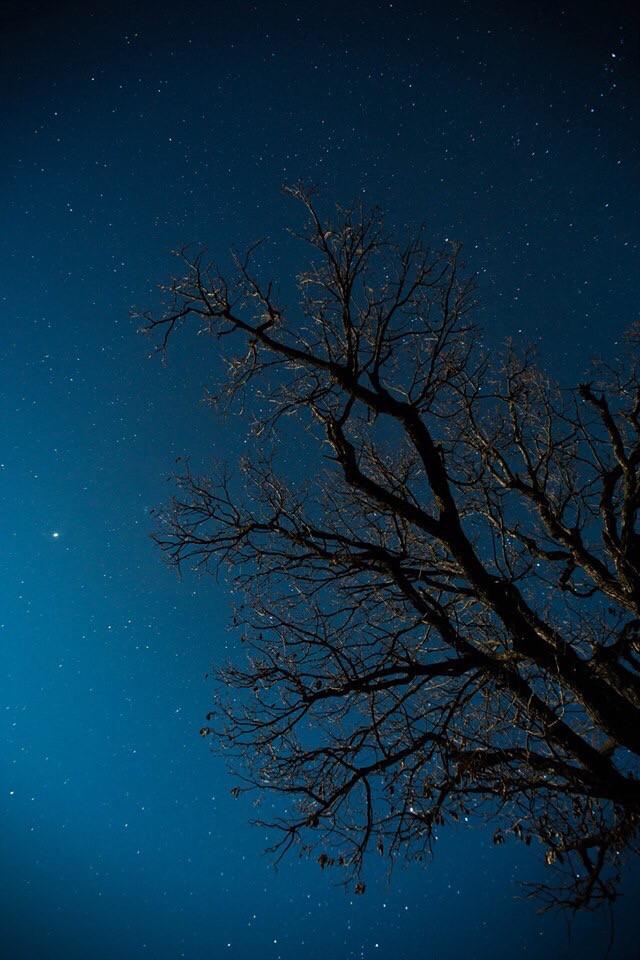 #stars  #night #tree #longshutter #armenia