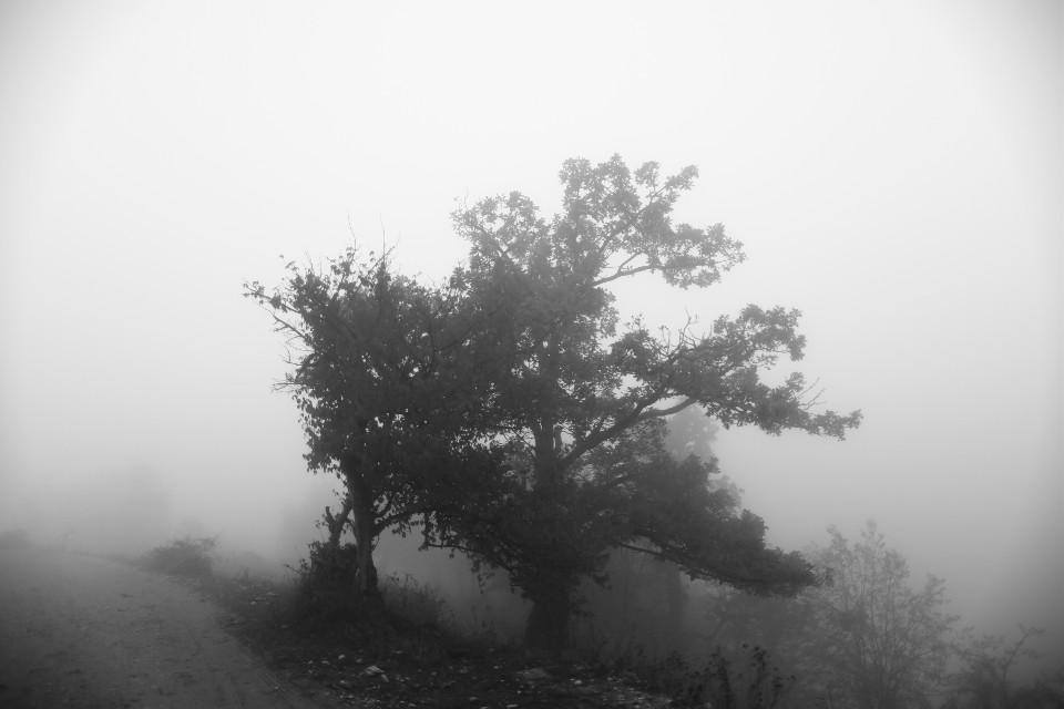#freetoedit #tree #blackandwhite #fog #mistic #armenia