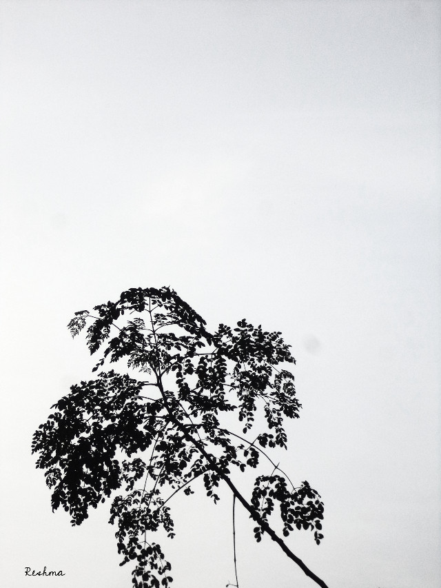 #photography #blackandwhite #leaf #tree #NegativeSpace #sky     @srish_t  Missing leaf story continues ;-)