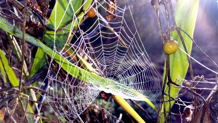 photography nature spidernet