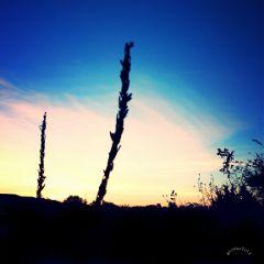 sunset sky silhouette charlotte