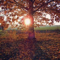 sunny autumn day photography nature