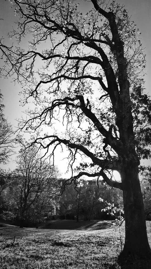 #blackandwhite #Autumn #nature #hdr #trees  #foliage  #sunset  #highlights #photography #eyecapture