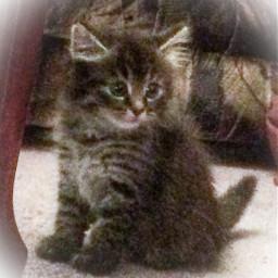 kitten pets summer memories love