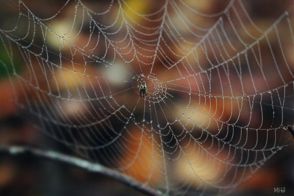 EOS 700D   #photography #nature #macro #autumn #spiderweb