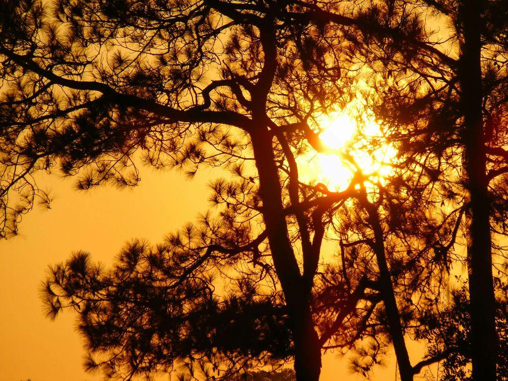 "#Sunset Screen"" [*F] #freetoedit #photography #nature #sunset #tree #screen #sun"