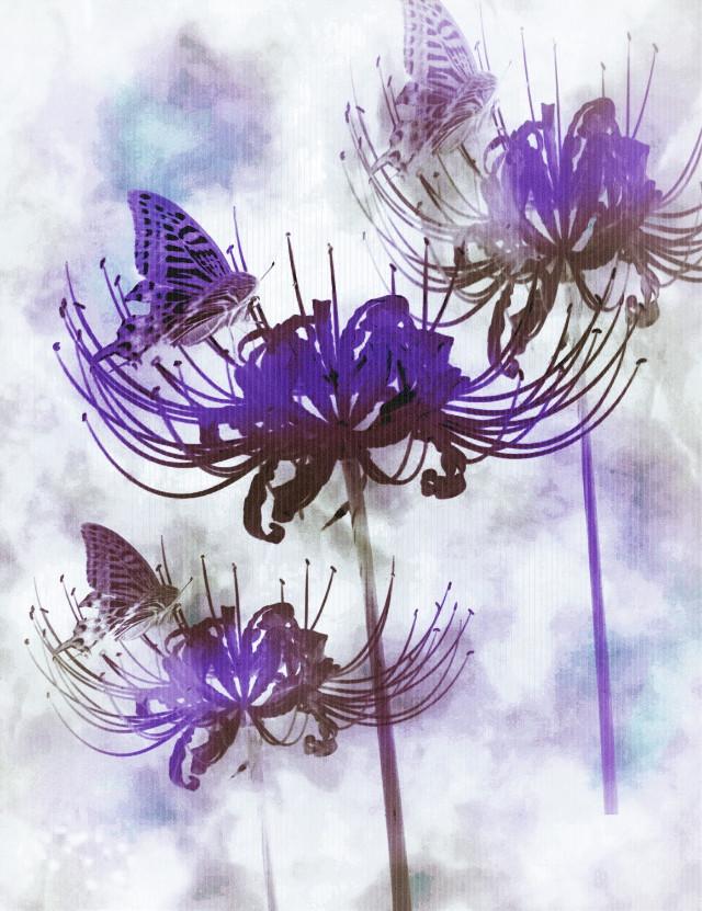 #art   #flower #nature