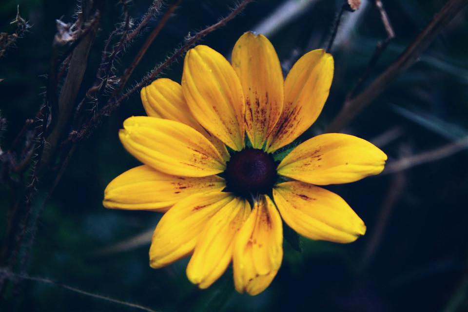 #nature #flower #colorful #adjusttool #dodger  #photography