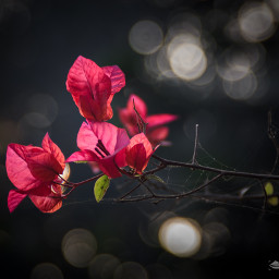 adorned attraction beautiful bloom blossom