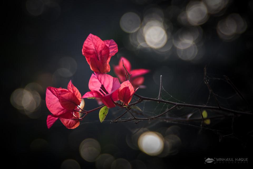 #Adorned, #Attraction, #Beautiful, #Bloom, #Blossom, #Bokeh, #Bright, #Carmine, #Category, #Cerise, #Chromatic, #Close, #Close Up, #Close-Up, #Closeup, #Color, #Colorful, #Coloring, #Colour, #Crimson, #Dark, #Darkness, #Efflorescence, #Fantasy, #Flashy, #Flora, #Floral, #Floret, #Florid, #Flourishing, #Flower, #Flowers, #Flush, #Foliage, #Fresh, #Glow, #Grassy, #Green, #Hue, #Hued, #Imagination, #Inflorescence, #Iridescence, #Leafy, #Love, #Lovely, #Luminosity, #Lush, #Maroon, #Miscellaneous, #Multicolored, #Night, #Nighttime, #Nocturnal, #Pink, #Qualities, #Quiet, #Red, #Rich, #Romantic, #Silence, #Splashy, #Tint, #Tone, #Twinkling, #Verdant, #Vibrant, #Vivid