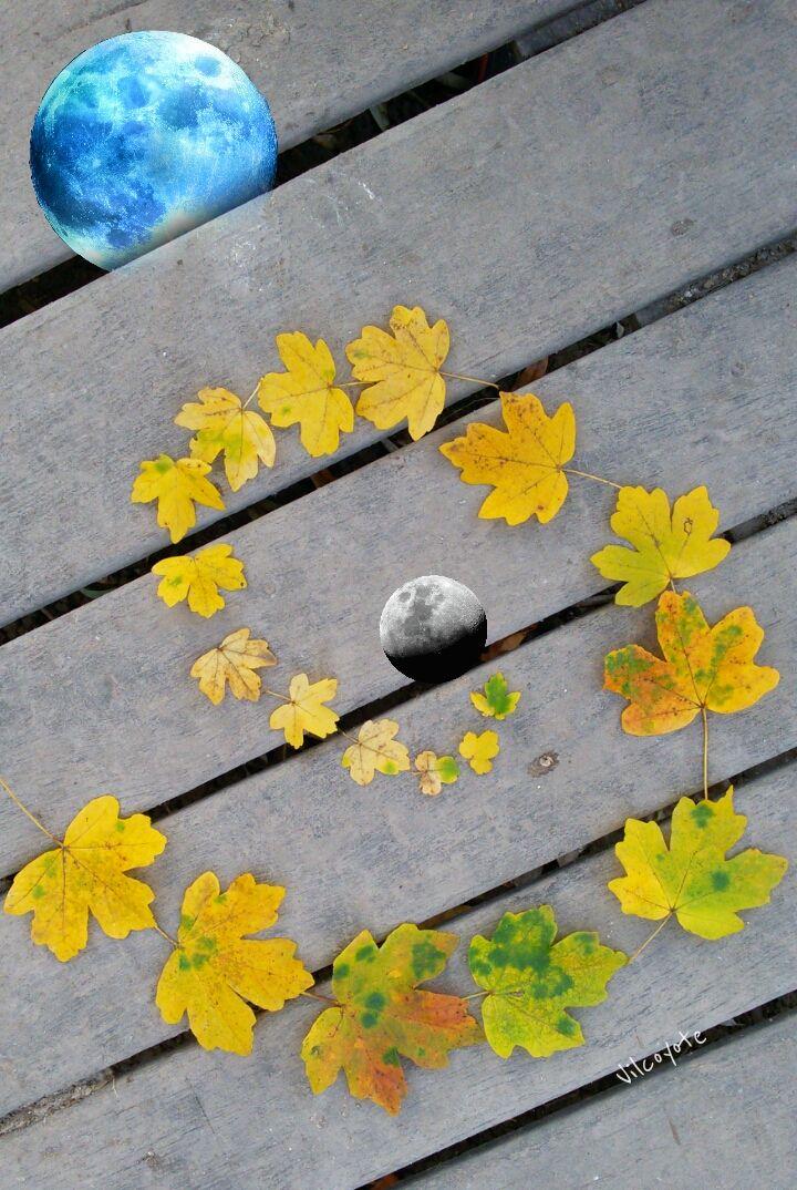 #collage #emotions #colorsplash #nature #photography #hdr #leaf #monn