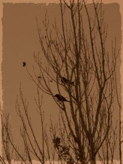 winter love photography petsandanimals nature