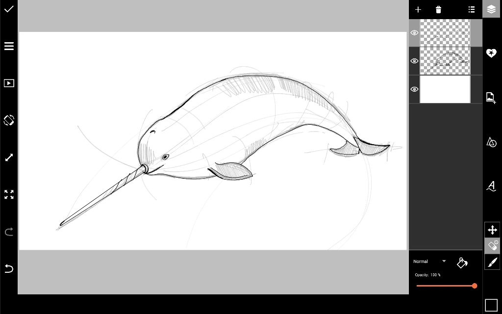 narwhal outline drawing