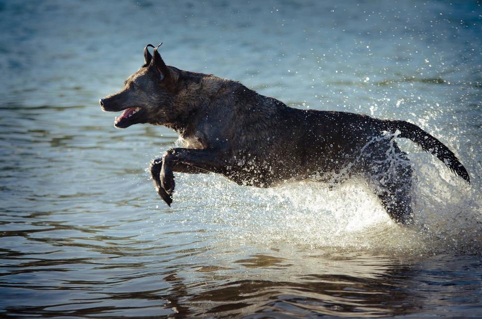#dog#water #fun#sea