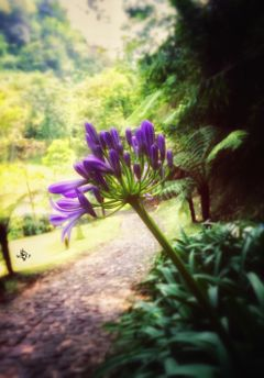nature beauty purple flowers blur