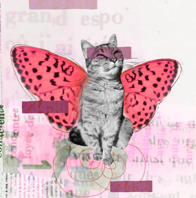 #cat #collage #digitalcollage