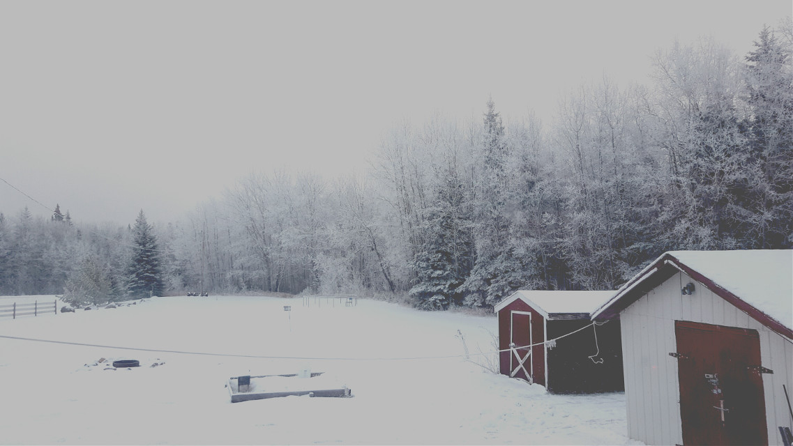 ❄💙 #throughmywindow #winter #snow