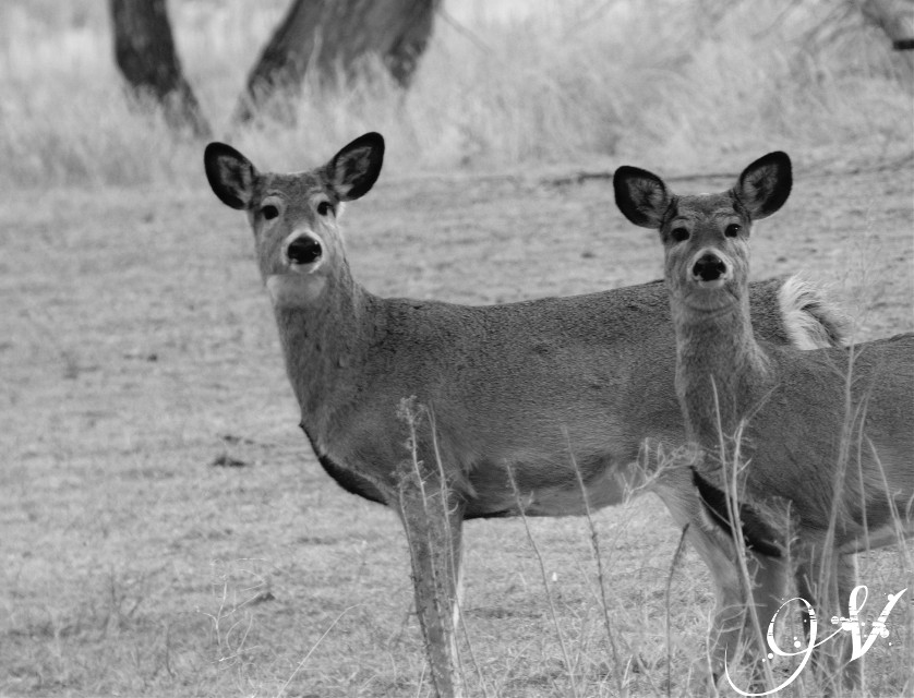 Oh deer it's cold today❄❄ #blackandwhite #cute #nature #petsandanimals #photography #deer