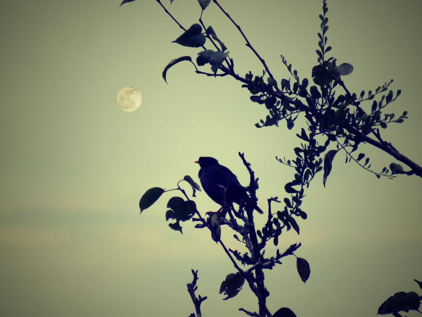 #Bird#tree#photography