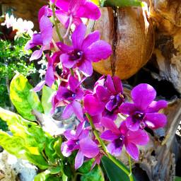 flower nature photograhy