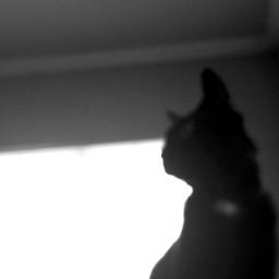 jynx blackcat blackandwhite blurry