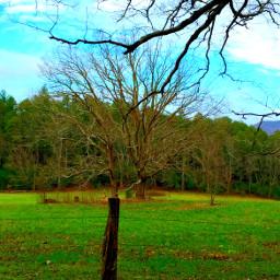tree repost dailyinsperation green grass