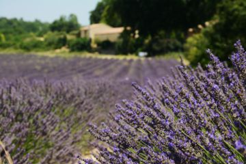 photography travel summer nature provence