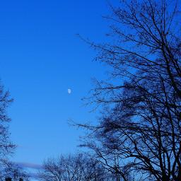 myphoto moon trees photography
