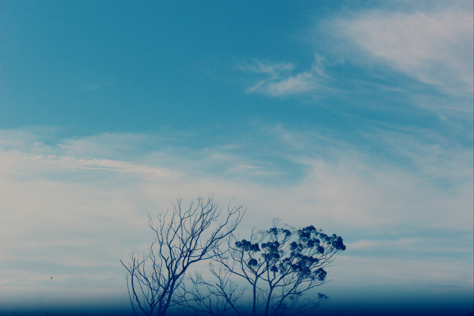 A clear day in Melbourne  #nature #clouds #photography #trees #sky