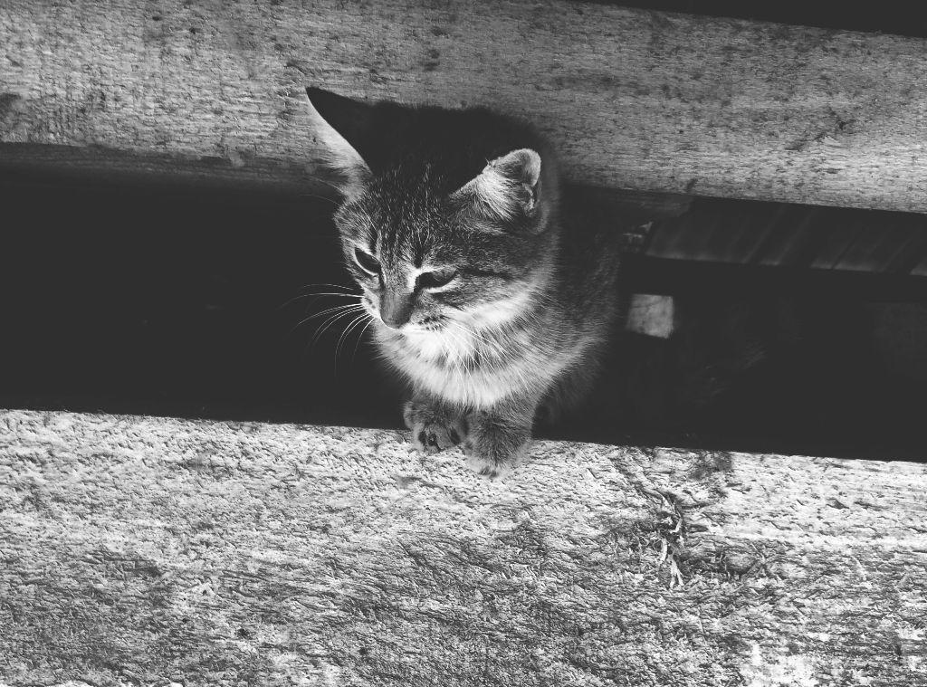 Sad...   #photography #cats #wppcatears  #black&white  #blackandwhitephotography #sad #animals #picsarteffects