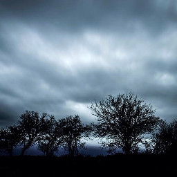 art interesting nature trees clouds