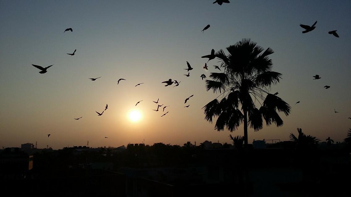 #sunrise  #birds  #motion #chaos #nofilter #nature #photography #naturephotography #scenery #home #beautiful #flockofbirds #pigeon