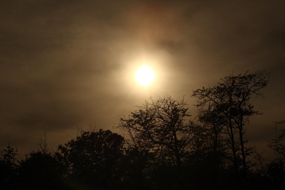 #freetoedit #sunset #nature
