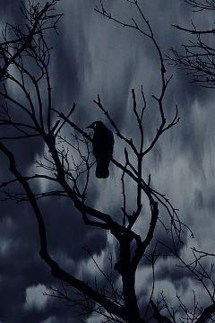 crispeffect crow freetoedit edited