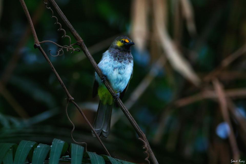 #bird #photography #nature #petsandanimals  #animals #zoo #cute #emotions #colorful