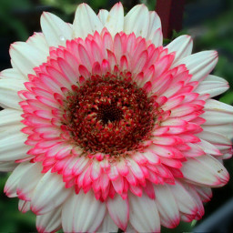 flower hdr spring