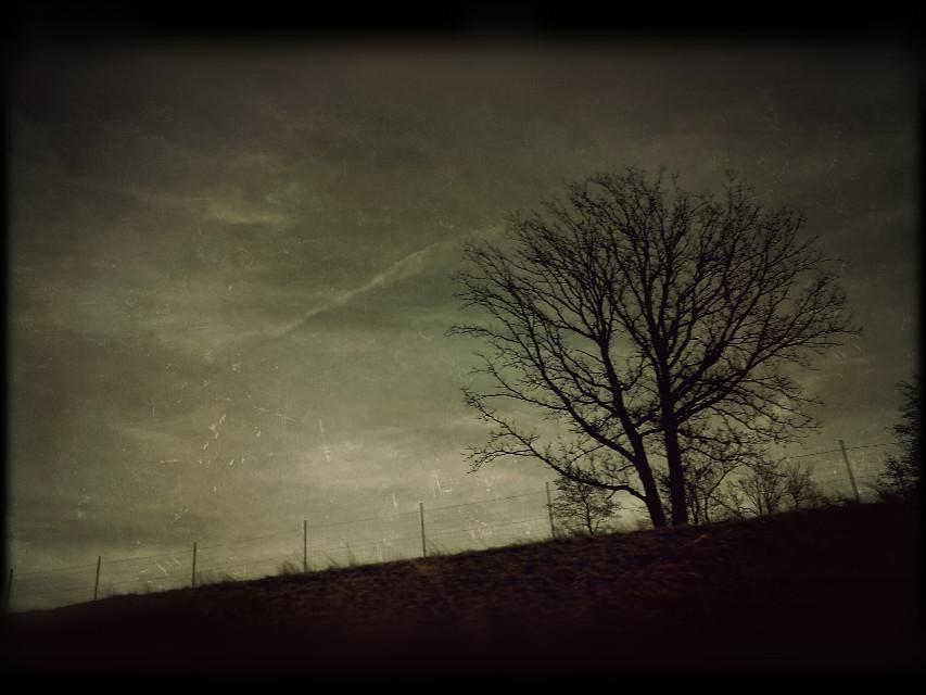 Good night! 😉🙌  #colorsplash #photography #oldphoto #nature  #tree