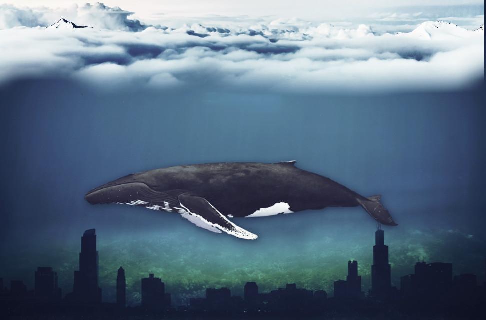 #surreal #freetoedit #edited #madewithpicsart #whale #clouds  Source::-(unsplash)