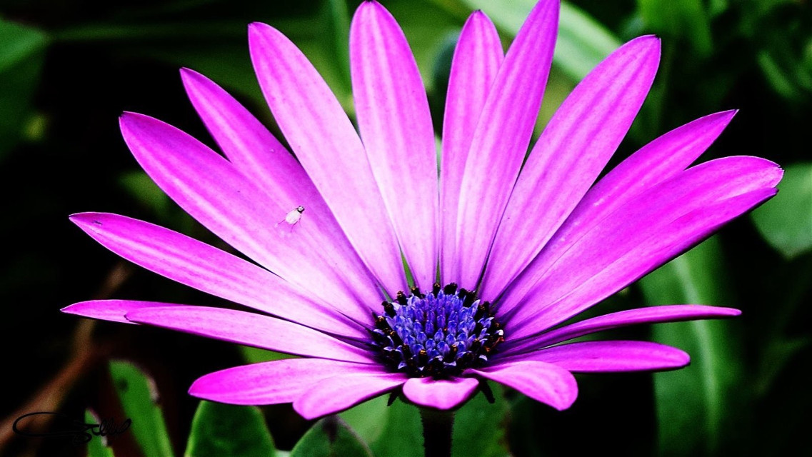 #nature #photography #flower #pink