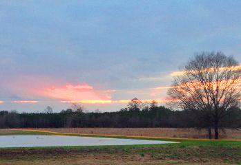 interesting sunset lovely trees pond