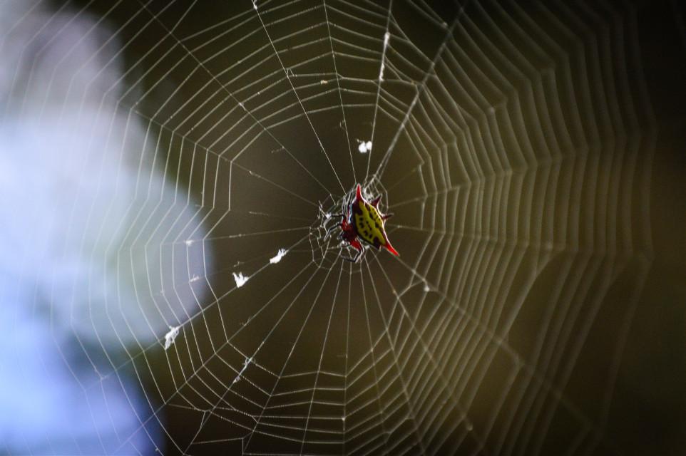 #spider  #spiderweb #petsandanimals #nature