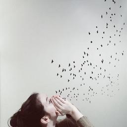 birds photography picsart breath