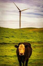 monday nature windturbine nikon california