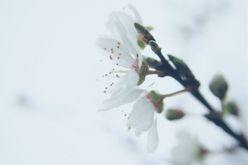 #nature #blossoms #outandabout #adjusttool #dodger #photography