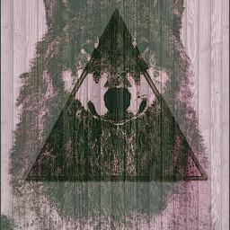 wolf animals winter