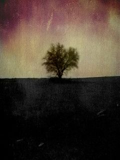 freetoedit tree photooftheday dark photography