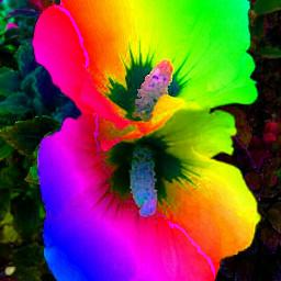 colorsplash colorful flower nature picsart