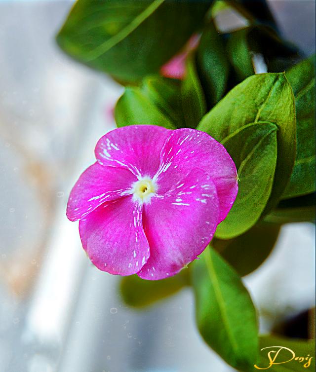 #flower#macro#colorful#