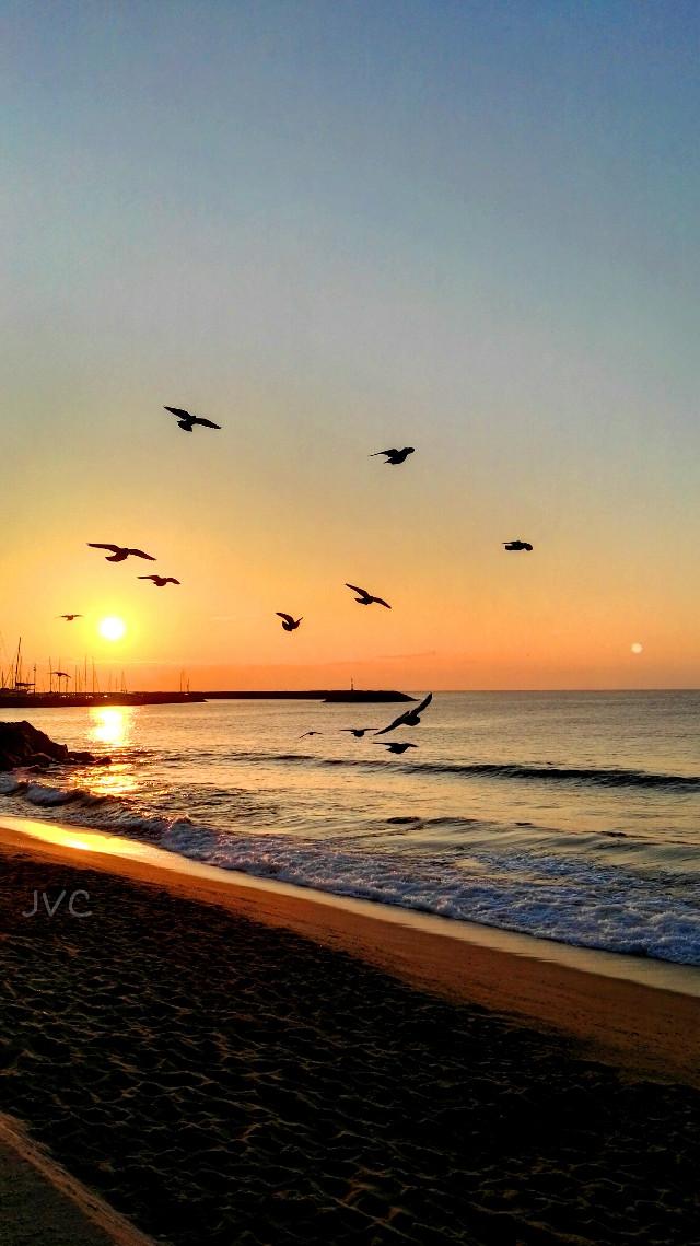 #newdaywelcome  #nuevodia #emotion #pidgeon #sunrise  #amanecer  #palomas #nuevodia #birds  #beach #playa #nature